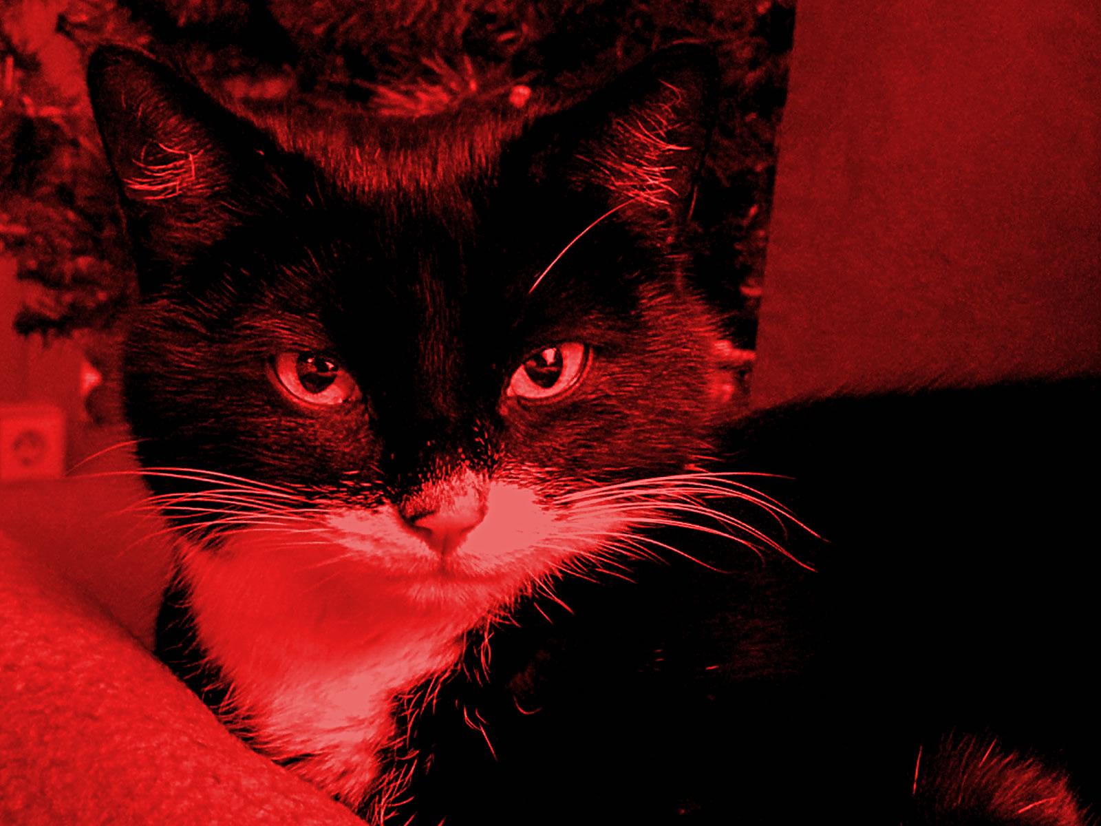 Office Cat Suna Givenmedia Internet Und Werbeagentur